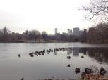 Frozen ducks on the edge