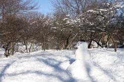 Central Park, uptown ski resort