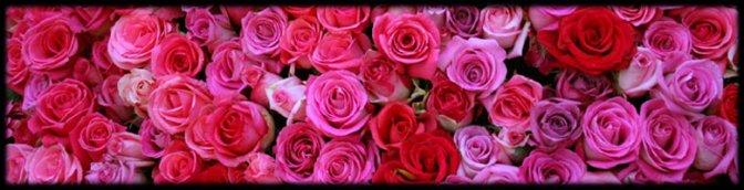 eau-de-rose-bandeau_312