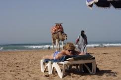 beach camel taghazout