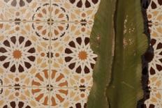 morocco tiles cactus
