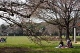 Yoyogi park at the beginning of the sakura season