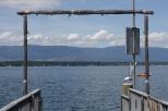 geneva lake seagulls
