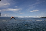 "Geneva's ""beach"" on the lake, taking a plunge"